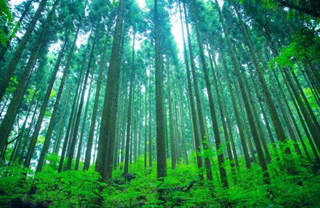 くじゅう九電の森」とは | 環境事業(環境教育) | 九電みらい財団